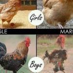 Geschlechtsspezifische Auswirkungen der Ehe