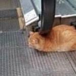 Katze l�sst sich massieren