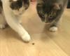 Katzen vs. Spinne -› Hits (2114)