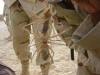 Riesige Kamelspinne
