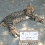 Bettel-Katze