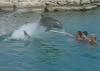 Brutaler Delphin
