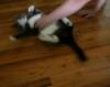 Der Katzen-Mop -› Hits (7391)