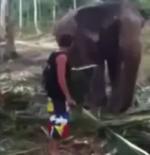 Elefant streicheln