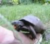 Geile Schildkröte
