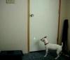 Hund jagt Laserpointer