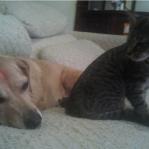 Hund und Katze �rgern