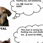 Hunde vs. Katzen