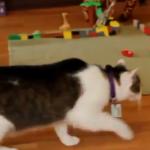 Katze auf Streifzug