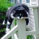 Katze h�ngt ab