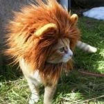 Katze macht auf Löwe