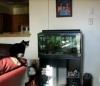 Katze vs. Aquarium -› Hits (4632)
