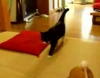 Massage f�r Katzen -› Hits (6946)
