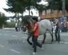 Pferdekick