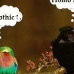 Schwarzer Rabe vs. bunter Vogel
