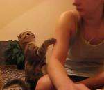 Streichel die Katze -› Hits (2146)