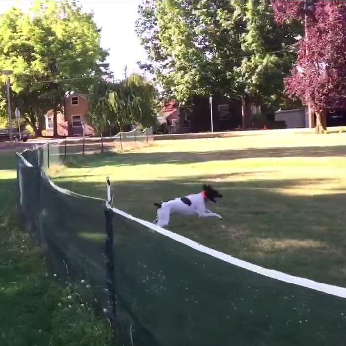 hund springt ber zaun