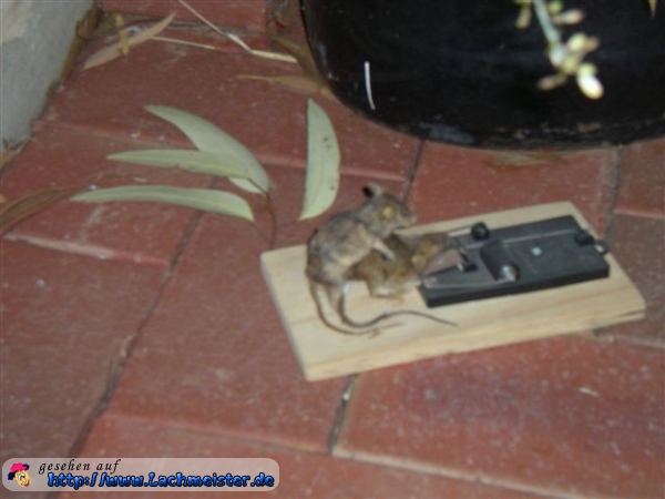 Bad day mouse trap