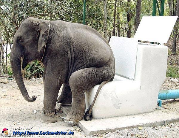 Elefanten Toilette