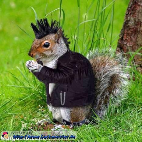 lustige eichhörnchen