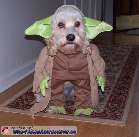 Der Yoda Hund