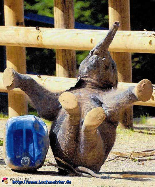 Elefant macht Kunststücke
