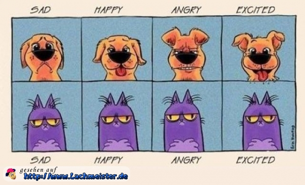 Emotionen: Katze vs. Hund