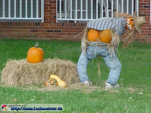 lustige bilder halloween