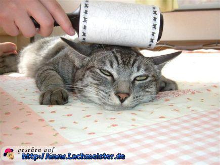 Katzenhaare Entfernen katzenhaare richtig entfernen
