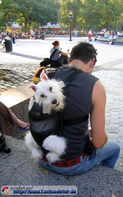 hund im rucksack