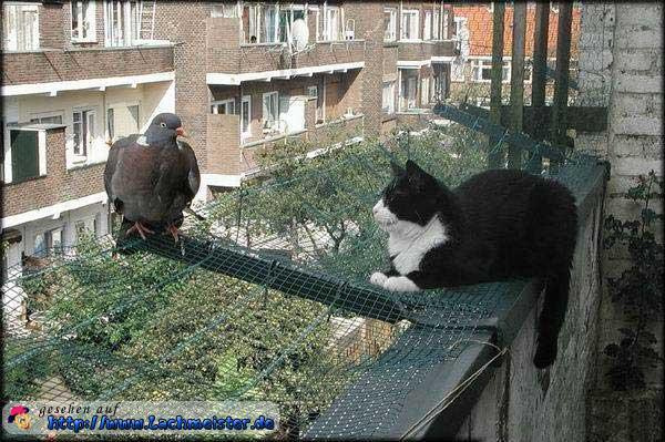 Funny Cats Doomed